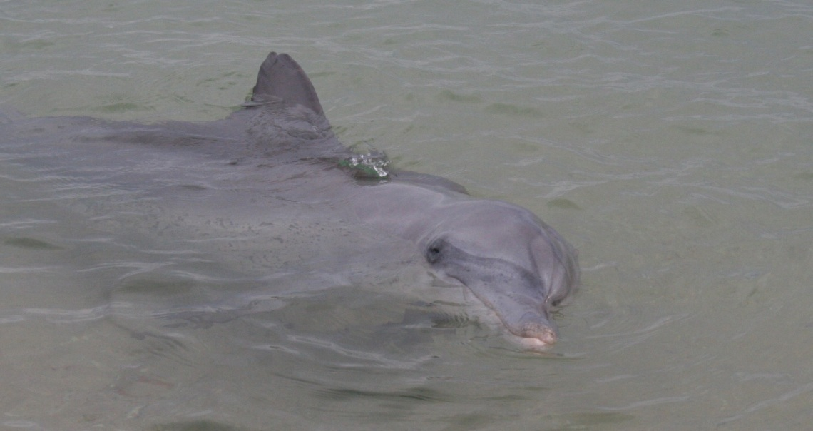 dolphinsmile